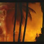 La morale e l'orrore: APOCALYPSE NOW REDUXdi Francis Ford Coppola