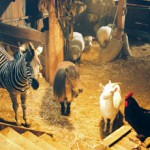 """Striscia, una zebra alla riscossa"" di Frederick Du Chau"