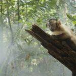 """VENEZIA 70 – """"Amazonia 3D"""", di Thierry Ragobert (Fuori Concorso)"""