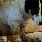 Heart of a Dog, di Laurie Anderson
