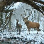 #Berlinale2017 – Orso d'oro a Ildikó Enyedi, Miglior regia a Aki Kaurismaki: ecco tutti i premi