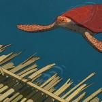 La tartaruga rossa film della Critica per il SNCCI