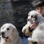 Belle e Sebastien: Amici per sempre, di Clovis Cornillac