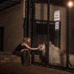 Mia e il leone bianco, di Gilles de Maistre