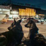 #Locarno72 – Space Dogs, di Elsa Kremser e Levin Peter