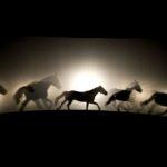 #Venezia76 – Les chevaux voyageurs, di Bartabas