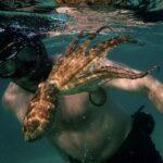 Il mio amico in fondo al mare, di Pippa Ehrlich e James Reed