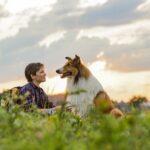 Lassie torna a casa, di Hanno Olderdissen